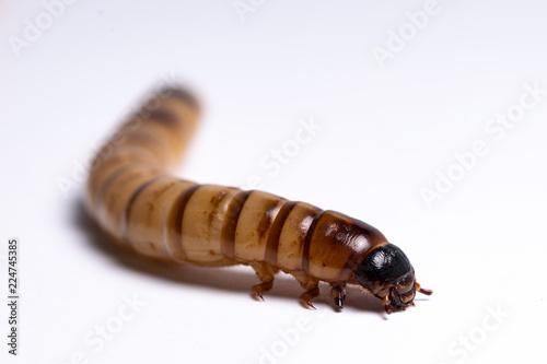 Fotografía  clear larva background