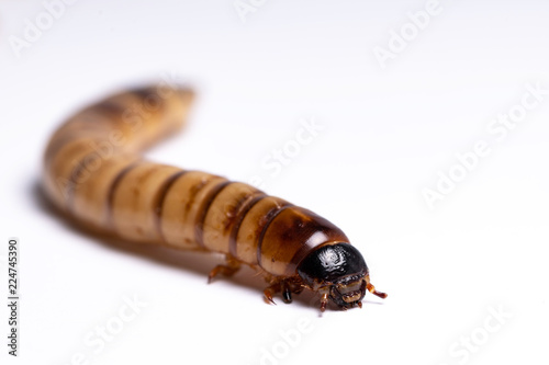 Fotomural  clear larva background