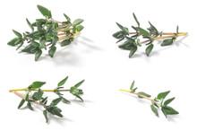Set Of Thyme Fresh Herbs (Thym...