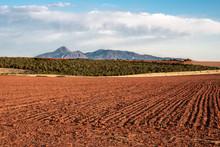 Sleeping Ute Bean Fields, Red ...