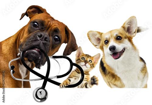 Photo veterinarian dog and cat