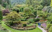 Butchart Gardens In Summer, Vi...