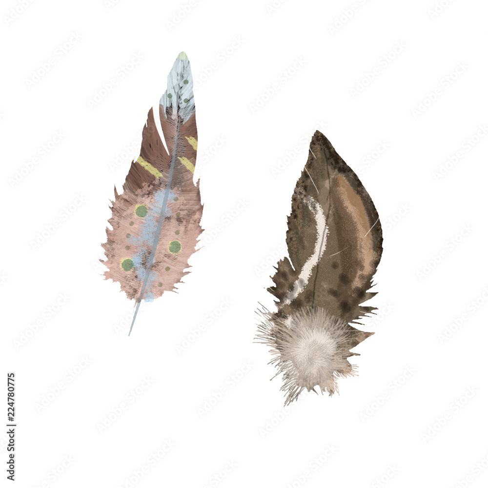 Watercolor feathers boho style clip art on whita background