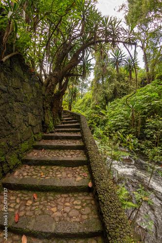 subiendo escaleras en el bosque