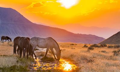 Fototapeta Onaqui Herd of Utah