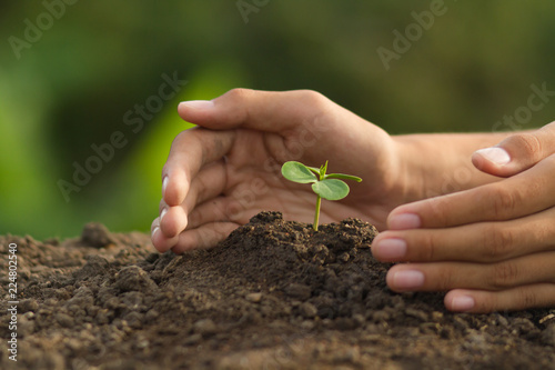 Photo  Hand protect plant grow on soil with green nature background