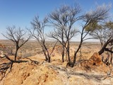 Outback trees
