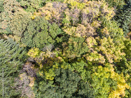 colorful foliage background of autumnal trees in forest. aerial view
