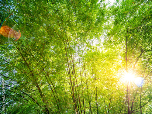 Poster Bamboo Bamboo forest background