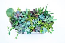 Composition Green And Blue Succulents Ceramic Pot.