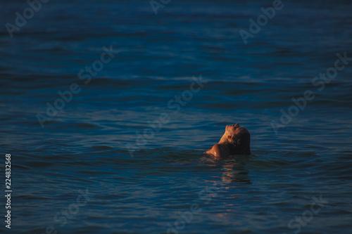 Fényképezés Young woman emerging from water