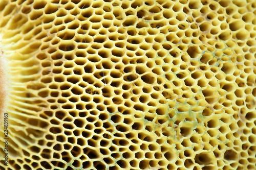 Türaufkleber Makrofotografie Background of flesh of the mushroom cap. The porous texture of the mushrooms are edible.