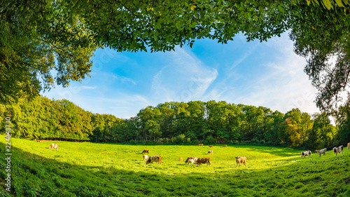 Cows in a green pasture surrounded by trees