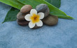 spa tropical flower between stones for massage salon on blue background.