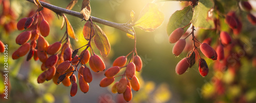 Foto op Canvas Bloemen Autumn background with yellow-red leaves and fruits. Autumn floral background.