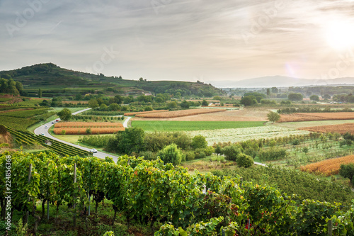vineyard sunrise at Ihringen Kaiserstuhl Germany