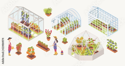 Fototapeta Bundle of various glass greenhouses with plants, flowers and vegetables growing inside, gardeners, farmers or agricultural workers isolated on white background. Colorful isometric vector illustration. obraz