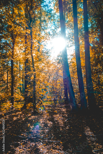 darken forest at autumn with lens flare on the top