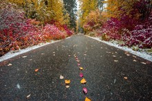 A Leaf And Fall Color Lined Road While Snowing In The Cascade Mountains