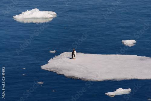 Foto op Plexiglas Antarctica Penguin standing on the ice