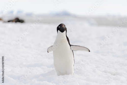 Fotobehang Pinguin Adelie penguin on beach