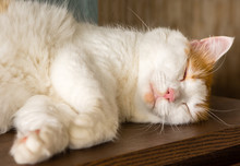 The Sweetest Dreams When The Cat Sleeps On The Left Side