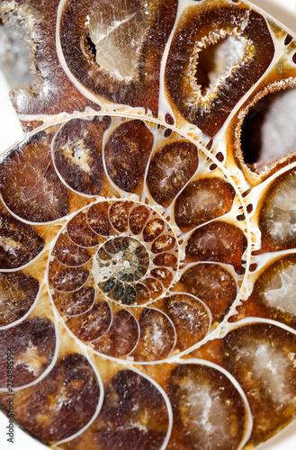 Photo sur Toile Les Textures versteinerter Ammonit