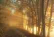 Leinwanddruck Bild Sonnenstrahlen im Spätherbst