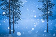 Heavy Snow In Lapland, Pallas-...