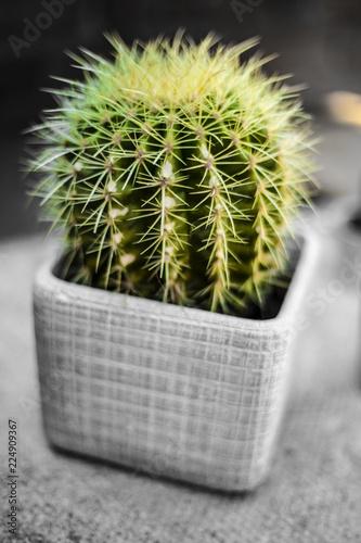 Staande foto Cactus Cactus In Pot Close Up