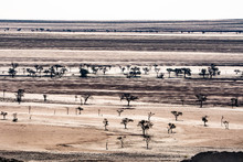 Layered Landscape Of Plains Punctuated By Silhouetted Dark Trees, South Of Walvis Bay, Namibia