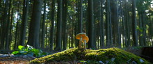 Mushroom In The Forest In East...