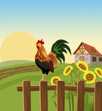 Morning In Village With Rooster