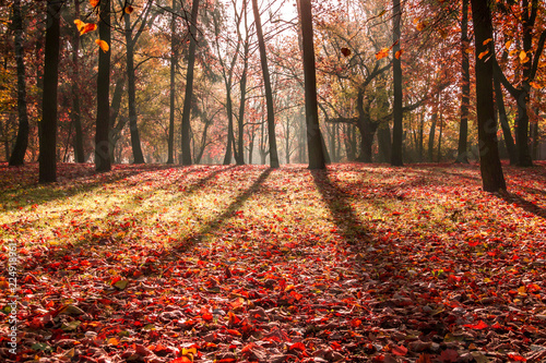 Keuken foto achterwand Rood traf. A beautiful morning in a park full of colorful autumn trees.