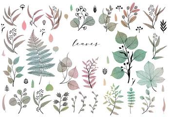 Branches and leaves, fall, spring, summer. Vintage botanical illustration, floral elements in colorful design