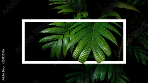 Tropical palm leaves nature frame layout, rainforest foliage plant trees on black background with white frame border.