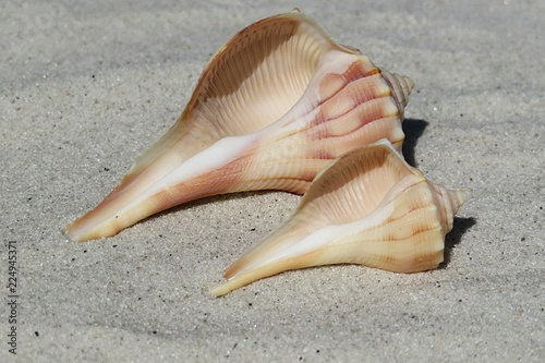 Fotografie, Obraz  Seashells on the beach