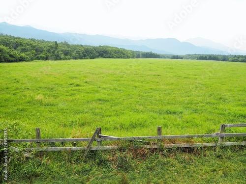 the farm in Japan