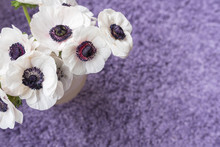 White Anemone Flowers  From Above Over Purple Carpet Background (selective Focus)