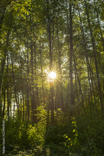 Poster Forets Sun Shining through the Tress in a Beautiful Forrest