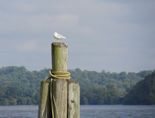 White Bird Perched On Top Of P...