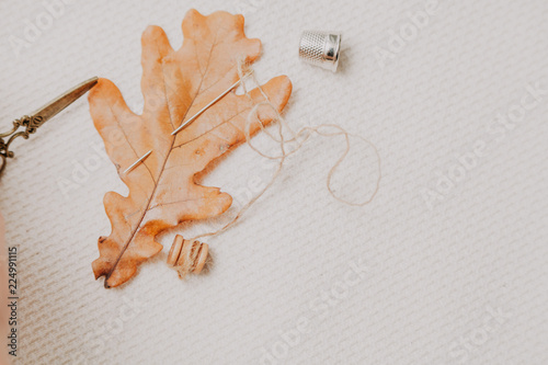 Fotografía  Yellow leaf of oak and needle lie on white cloth
