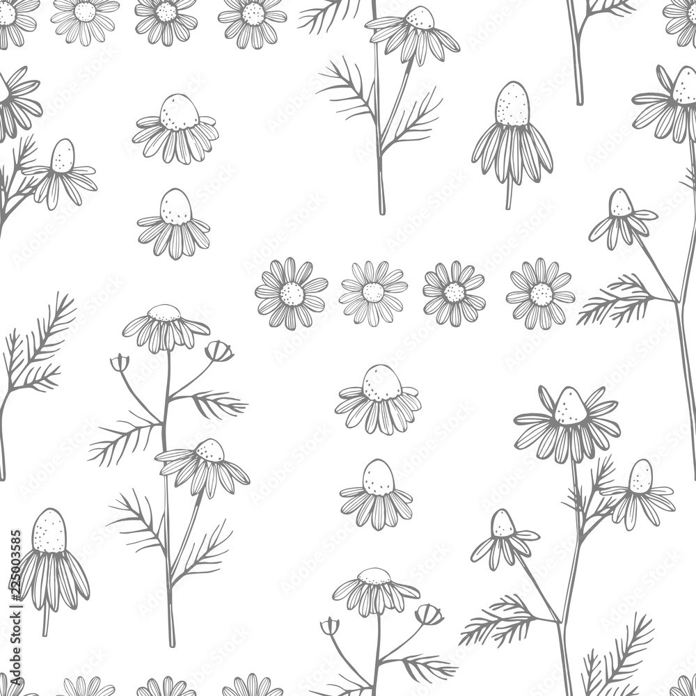 Fototapety, obrazy: Hand drawn chamomile flowers on white background .Vector  seamless pattern