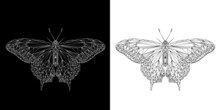 Butterfly Abstract Low Poly Wireframe Isolated On Black And White Background, Symmetrical Vector Illustration. Insect With Geometry Triangle. Polygonal Style Trendy Abstract Concept.