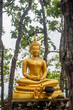 Buddha statue in the forest