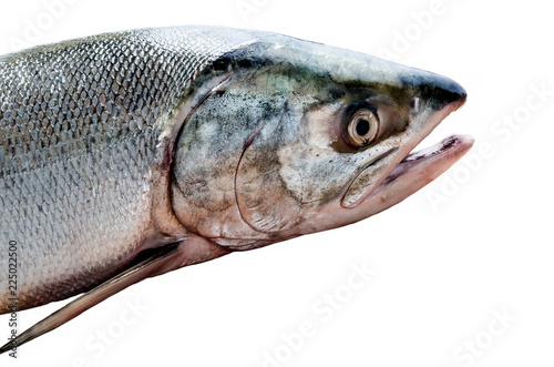Foto op Plexiglas Vis fresh red fish salmon on white background