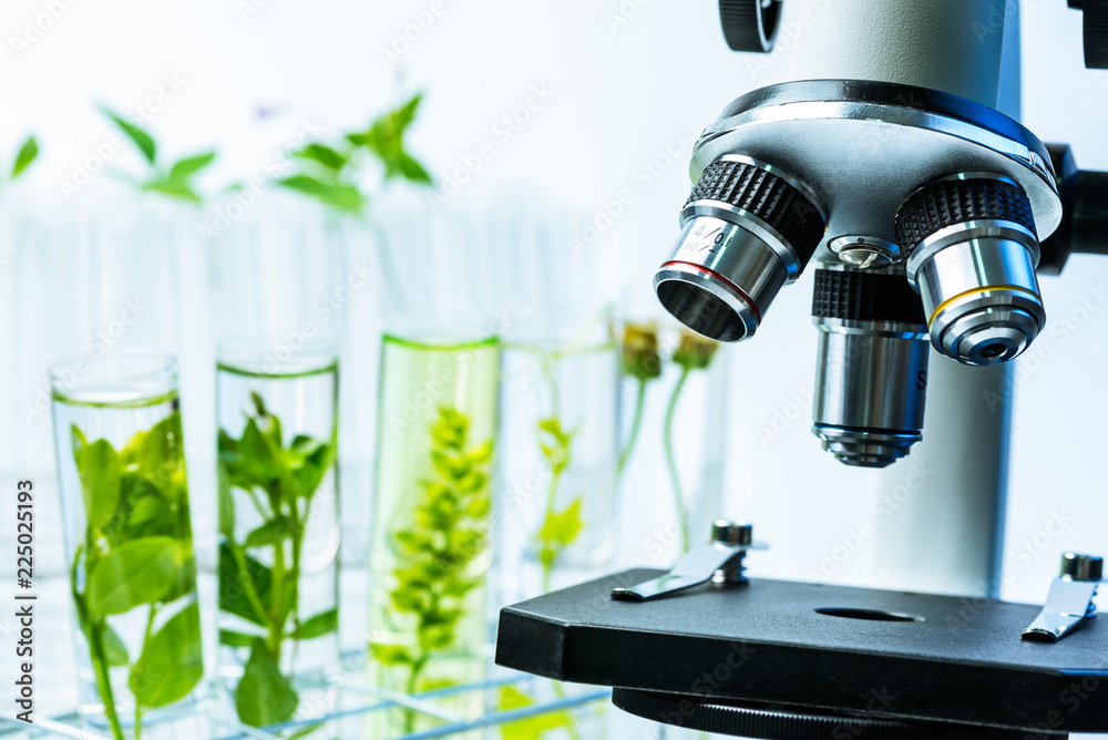 Fototapeta microscope and young plant in science test tube , lab research biochemistry , biotechnology concept