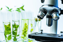 Microscope And Young Plant In Science Test Tube , Lab Research Biochemistry , Biotechnology Concept