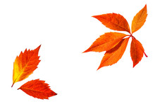Autumn Colors Leaves Collage,  Foliage Isolated On White Background