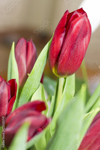 Foto op Aluminium Tulp Bouquet of red tulip isolated on white background